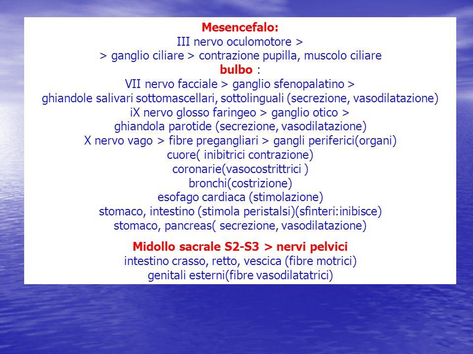 Mesencefalo: III nervo oculomotore > > ganglio ciliare > contrazione pupilla, muscolo ciliare bulbo : VII nervo facciale > ganglio sfenopalatino > ghi