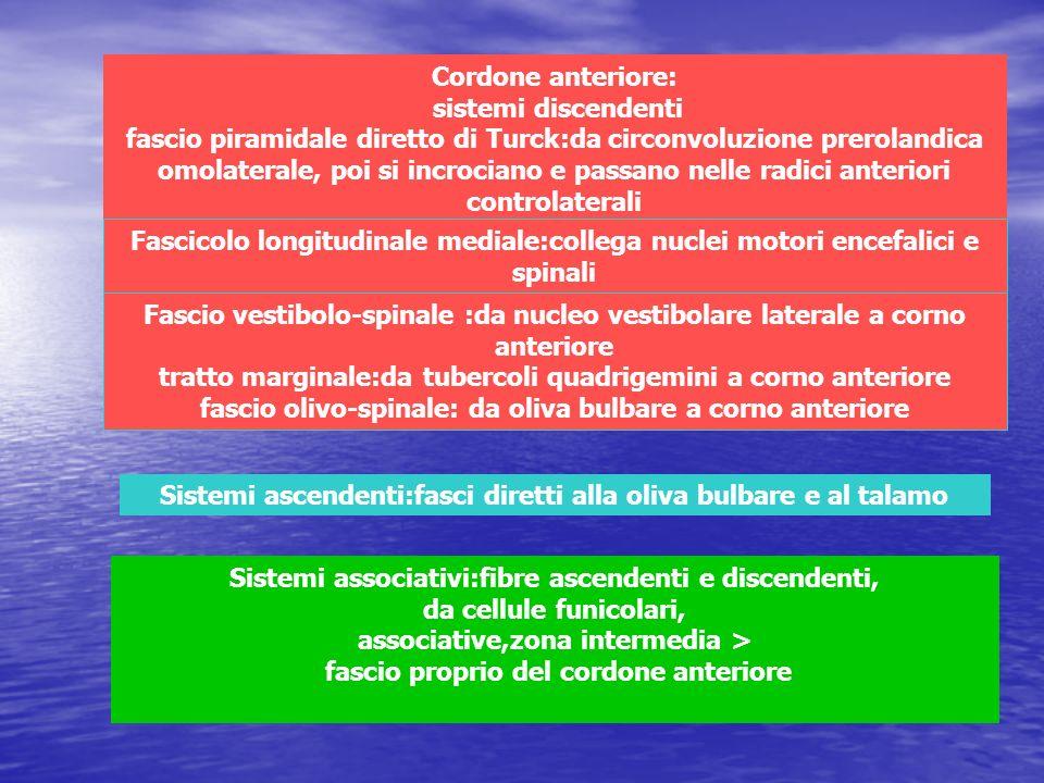 Cordone anteriore: sistemi discendenti fascio piramidale diretto di Turck:da circonvoluzione prerolandica omolaterale, poi si incrociano e passano nel