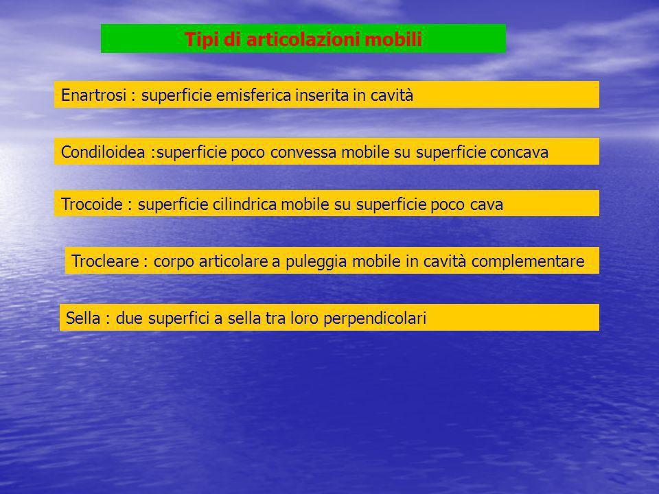 Omero (testa) > scapola (cavità glenoidea) enartrosi Omero (troclea) > ulna (olecrano-incisura sigmoidea) trocleare Omero (condilo) > radio (fossetta glenoidea) condiloidea