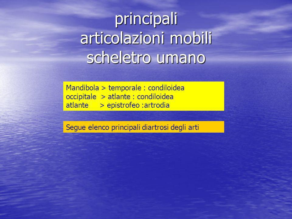 Omero > scapola :enartrosi omero > ulna :trocleare omero > radio:condiloidea radio > ulna :trocoide (prossimale) radio > ulna :trocoide (distale) radio > carpo :condiloidea trapezio > 1 metacarpale :sella carpali distali > 2,3,4,5 metacarpali:artrodie interfalangee :trocleari metacarpali > falangi : condiloidee scafoide > trapezio+trapezoide :artrodia scafoide+semilunare+piramidale > capitato+uncinato :condiloidea femore > cinto pelvico :enartrosi femore > tibia :trocleare tibia > fibula :artrodia (prossimale) tibia > fibula :sindesmosi (distale) tibia > astragalo :trocleare astragalo > calcagno :artrodia astragalo > calcagno+ navicolare :enartrosi calcagno > cuboide :sella tarsali 2 fila interconnesse : artrodie tarsali 2 fila > metatarsali : artrodie metatarsali > falangi :condiloidee falangi interconnesse : trocleari
