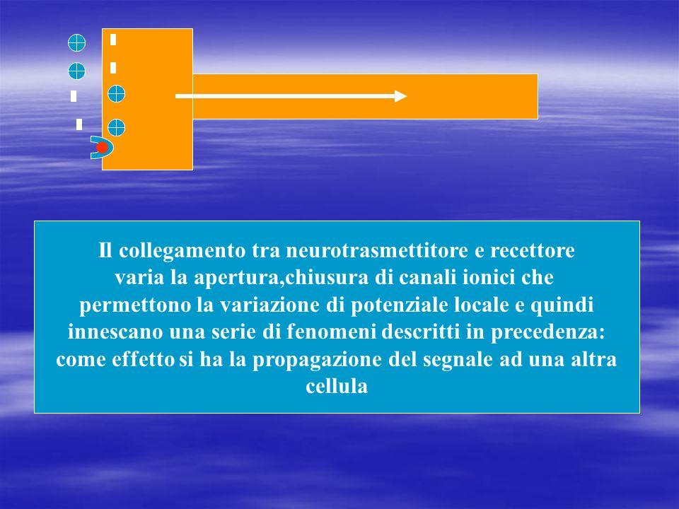 Il collegamento tra neurotrasmettitore e recettore varia la apertura,chiusura di canali ionici che permettono la variazione di potenziale locale e qui