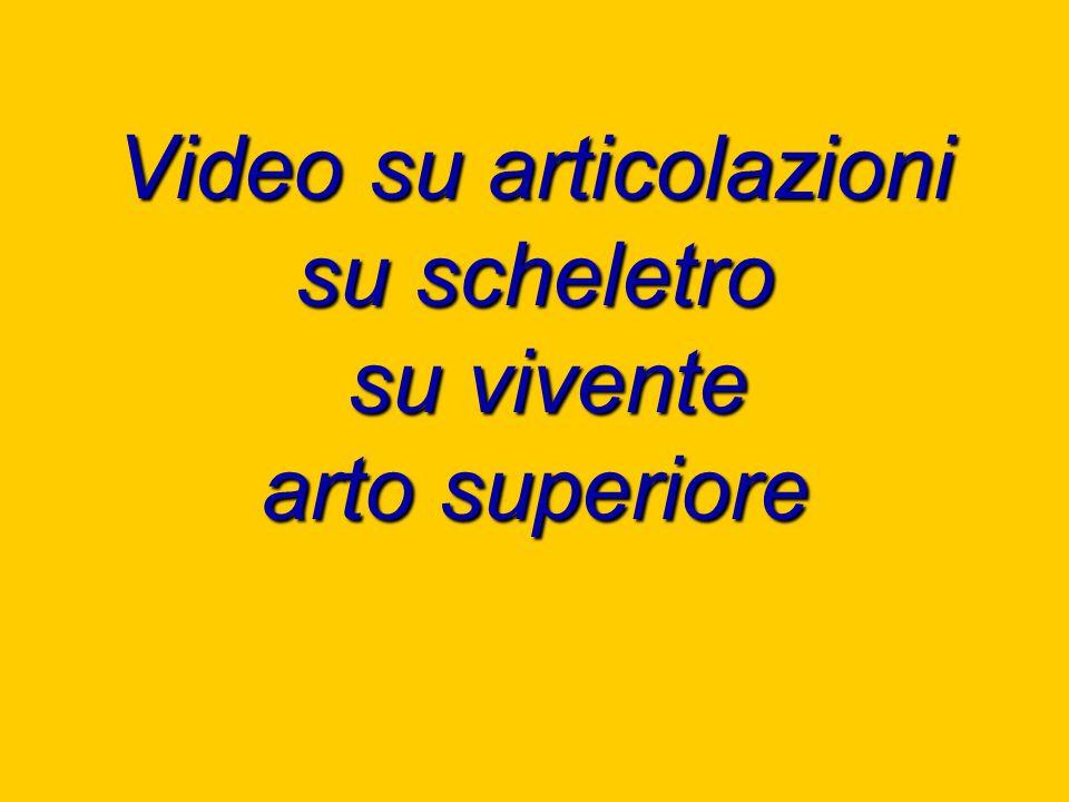 Video su articolazioni su scheletro su vivente arto superiore