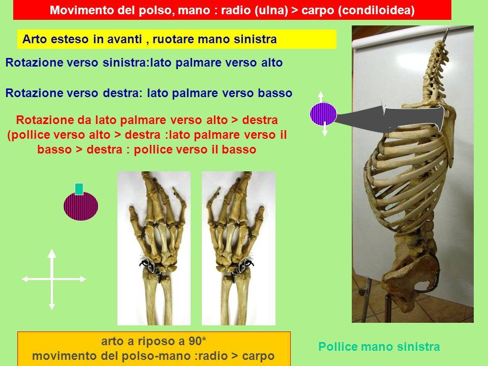 Movimento del polso, mano : radio (ulna) > carpo (condiloidea) arto a riposo a 90* movimento del polso-mano :radio > carpo Pollice mano sinistra Rotaz