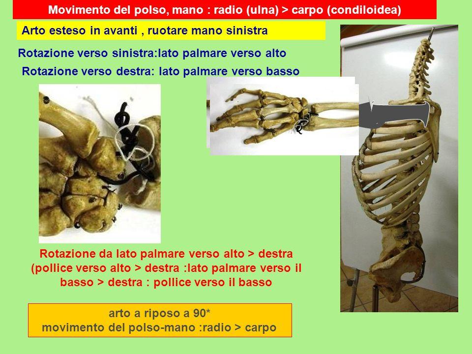 Movimento del polso, mano : radio (ulna) > carpo (condiloidea) arto a riposo a 90* movimento del polso-mano :radio > carpo Rotazione verso sinistra:la