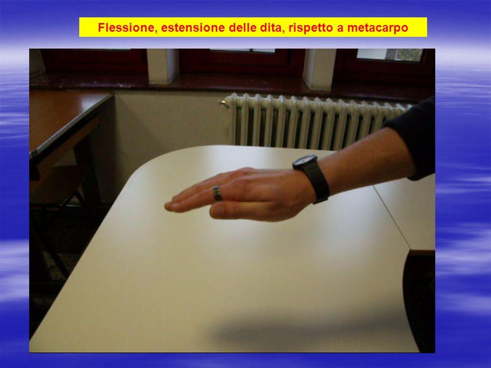 Flessione, estensione delle dita, rispetto a metacarpo