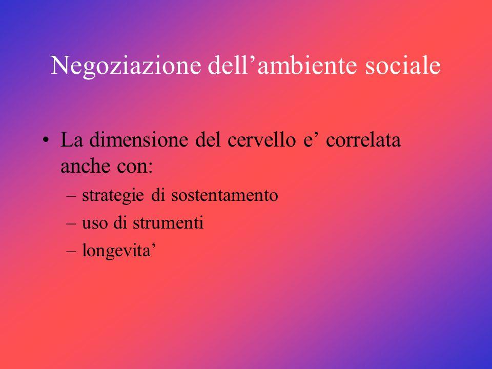 Negoziazione dellambiente sociale La dimensione del cervello e correlata anche con: –strategie di sostentamento –uso di strumenti –longevita