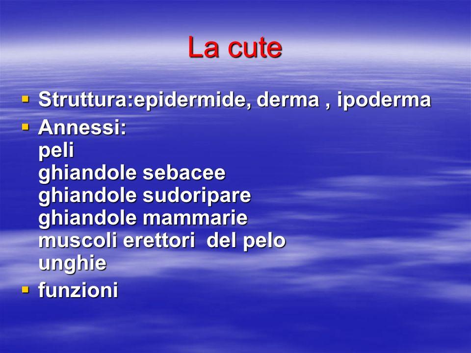 La cute Struttura:epidermide, derma, ipoderma Struttura:epidermide, derma, ipoderma Annessi: peli ghiandole sebacee ghiandole sudoripare ghiandole mam