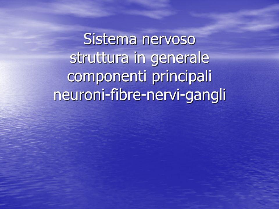 Neuroni, fibre nervose, nervi, gangli Gangli :associazioni di neuroni (cerebro-spinali, simpatici) extra nevrasse comprendono: stroma connettivale( avvolge, suddivide con setti il ganglio) cellule nervose di due tipi: tipiche,sferoidali, con neurite che si divide in due branche a T una branca diretta verso centro, radici posteriori, una branca verso la periferia, organi dai quali ricevere stimoli atipiche :fenestrate, elevate, plessi pericellulari, cirrose Nuclei :associaziomi di neuroni allinterrno del nevrasse Branca centrifuga Branca centripeta Cellula a T