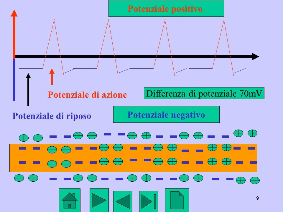 9 Potenziale di riposo Potenziale di azione Potenziale positivo Potenziale negativo Differenza di potenziale 70mV