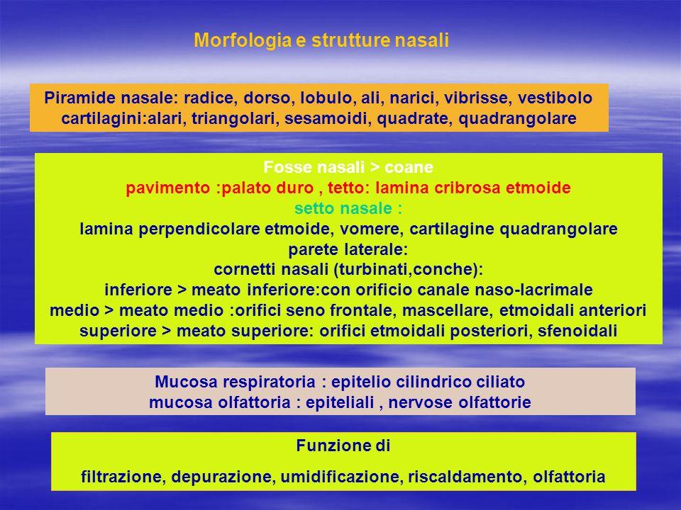 Morfologia e strutture nasali Piramide nasale: radice, dorso, lobulo, ali, narici, vibrisse, vestibolo cartilagini:alari, triangolari, sesamoidi, quad