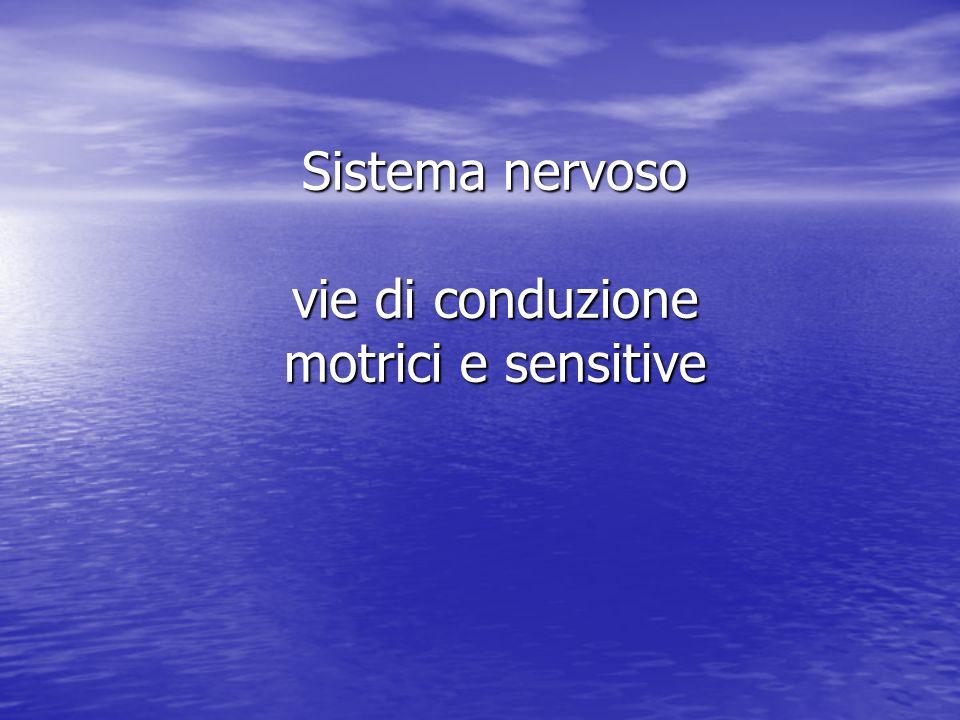 Sistema nervoso vie di conduzione motrici e sensitive