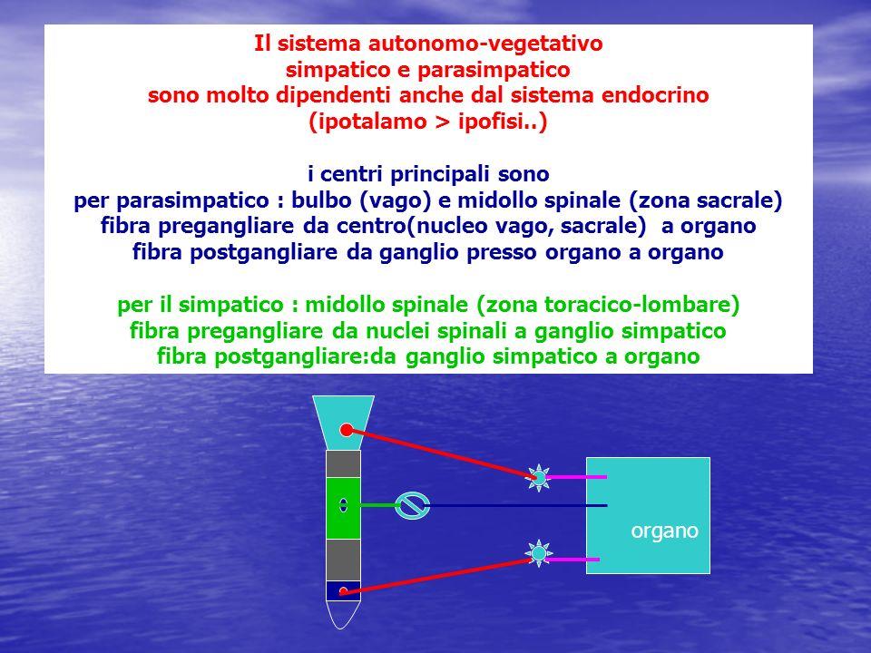 Il sistema autonomo-vegetativo simpatico e parasimpatico sono molto dipendenti anche dal sistema endocrino (ipotalamo > ipofisi..) i centri principali