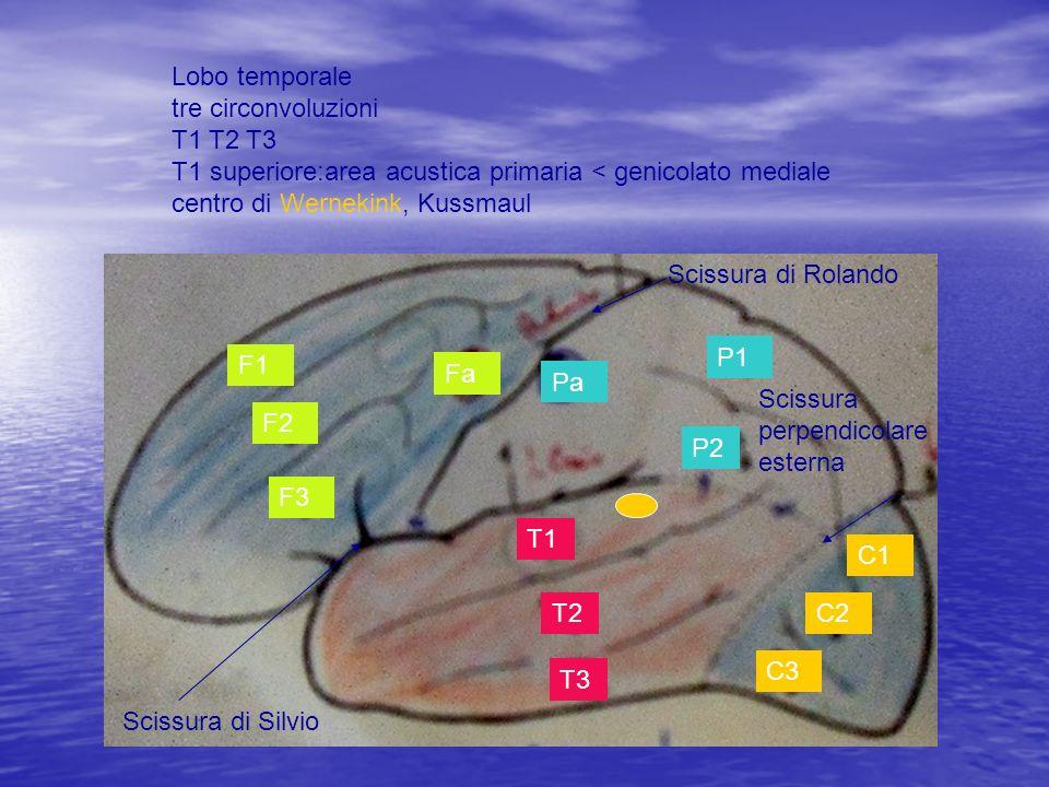 F1 F2 F3 Fa Pa P1 P2 T1 T2 T3 C1 C2 C3 Scissura di Rolando Scissura di Silvio Scissura perpendicolare esterna Lobo temporale tre circonvoluzioni T1 T2