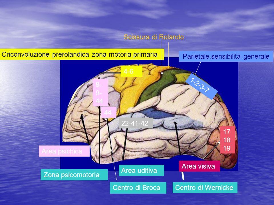 Parietale,sensibilità generale Criconvoluzione prerolandica zona motoria primaria Zona psicomotoria Centro di Broca Area uditiva Centro di Wernicke Ar