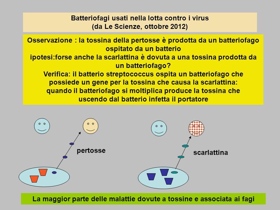 Batteriofagi usati nella lotta contro i virus (da Le Scienze, ottobre 2012) Osservazione : la tossina della pertosse è prodotta da un batteriofago ospitato da un batterio ipotesi:forse anche la scarlattina è dovuta a una tossina prodotta da un batteriofago.