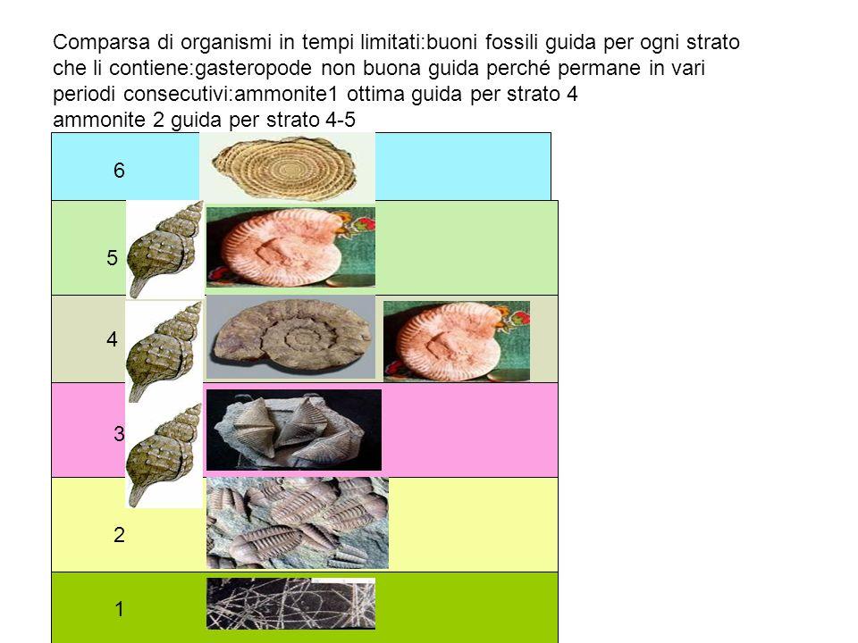 1 2 3 4 5 6 Comparsa di organismi in tempi limitati:buoni fossili guida per ogni strato che li contiene:gasteropode non buona guida perché permane in