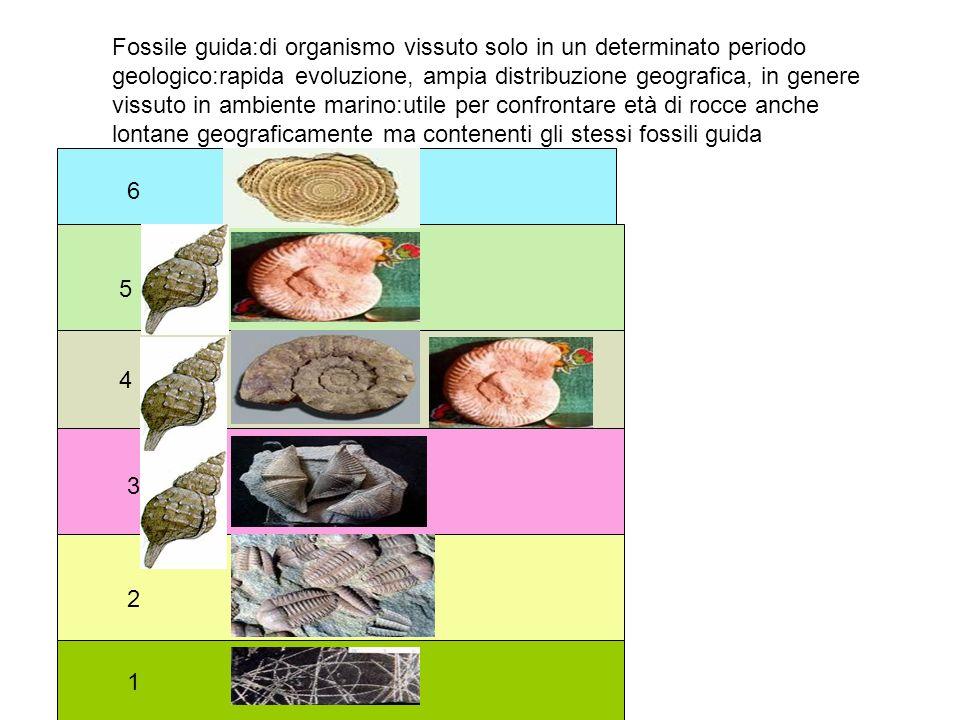 Fossile guida:di organismo vissuto solo in un determinato periodo geologico:rapida evoluzione, ampia distribuzione geografica, in genere vissuto in am