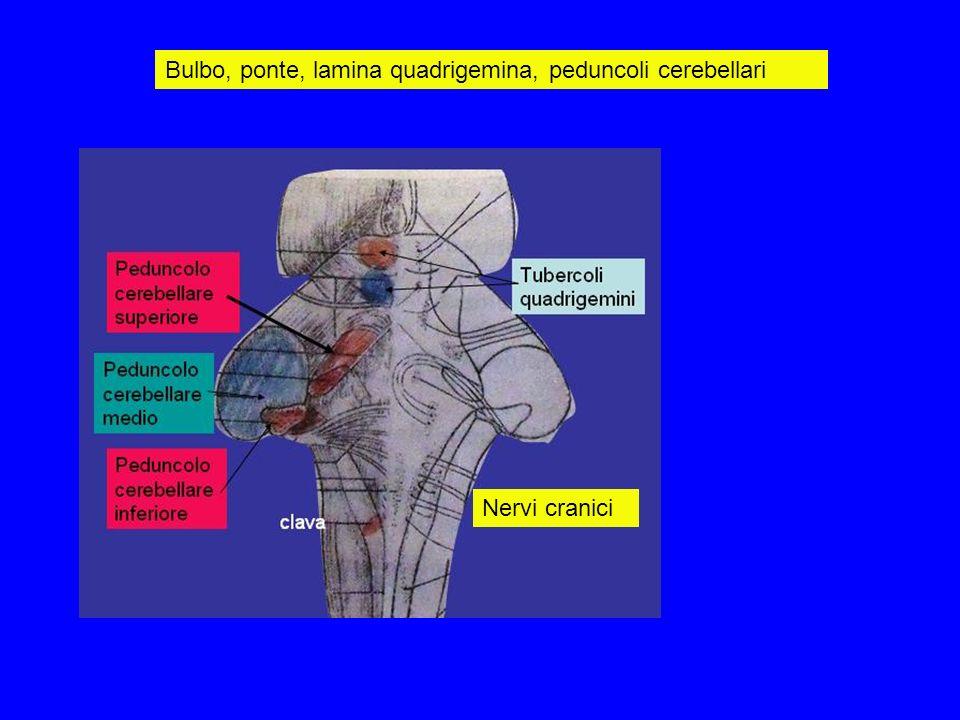 Bulbo, ponte, lamina quadrigemina, peduncoli cerebellari Nervi cranici