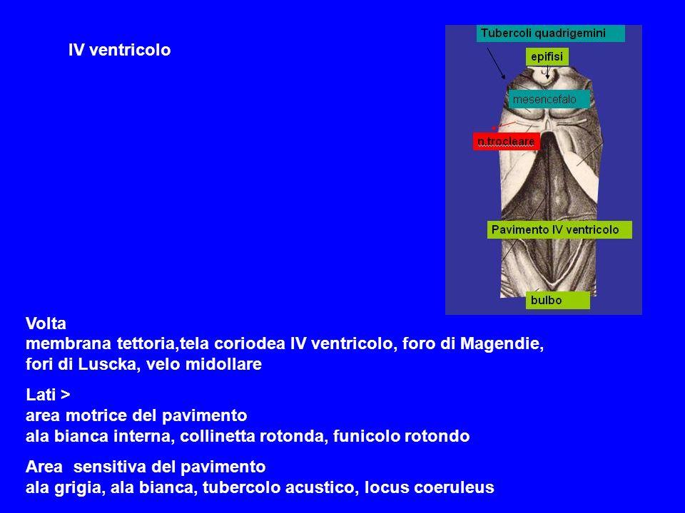 IV ventricolo Volta membrana tettoria,tela coriodea IV ventricolo, foro di Magendie, fori di Luscka, velo midollare Lati > area motrice del pavimento ala bianca interna, collinetta rotonda, funicolo rotondo Area sensitiva del pavimento ala grigia, ala bianca, tubercolo acustico, locus coeruleus