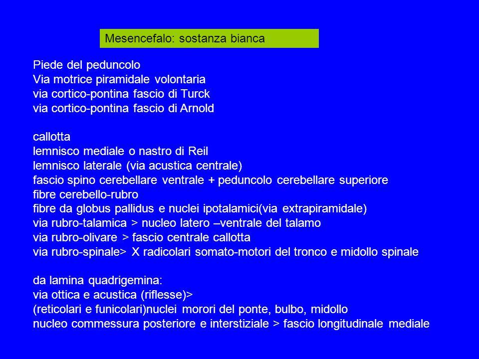 Mesencefalo: sostanza bianca Piede del peduncolo Via motrice piramidale volontaria via cortico-pontina fascio di Turck via cortico-pontina fascio di Arnold callotta lemnisco mediale o nastro di Reil lemnisco laterale (via acustica centrale) fascio spino cerebellare ventrale + peduncolo cerebellare superiore fibre cerebello-rubro fibre da globus pallidus e nuclei ipotalamici(via extrapiramidale) via rubro-talamica > nucleo latero –ventrale del talamo via rubro-olivare > fascio centrale callotta via rubro-spinale> X radicolari somato-motori del tronco e midollo spinale da lamina quadrigemina: via ottica e acustica (riflesse)> (reticolari e funicolari)nuclei morori del ponte, bulbo, midollo nucleo commessura posteriore e interstiziale > fascio longitudinale mediale