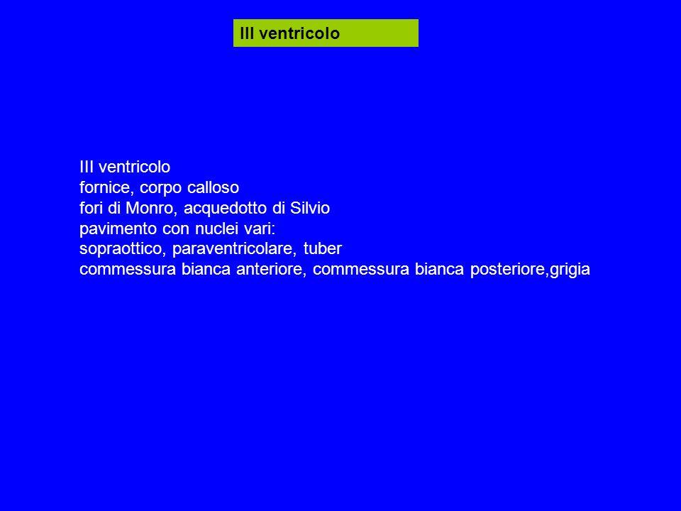 III ventricolo fornice, corpo calloso fori di Monro, acquedotto di Silvio pavimento con nuclei vari: sopraottico, paraventricolare, tuber commessura bianca anteriore, commessura bianca posteriore,grigia