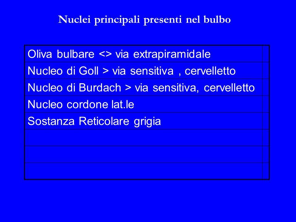 Nuclei principali presenti nel bulbo Oliva bulbare <> via extrapiramidale Nucleo di Goll > via sensitiva, cervelletto Nucleo di Burdach > via sensitiva, cervelletto Nucleo cordone lat.le Sostanza Reticolare grigia