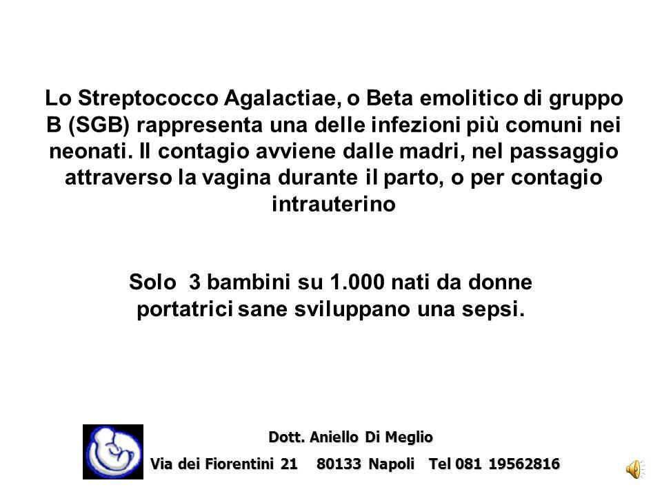 Streptococco Beta emolitico di gruppo B (SGB) Dott.ssa Gabriella Vullo Dott.