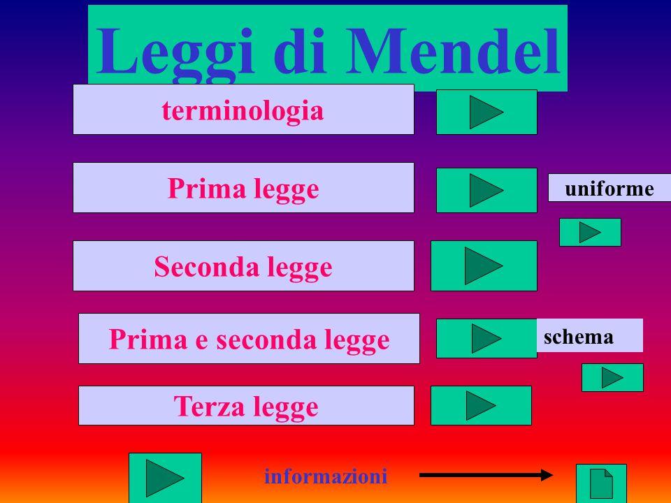 1 Leggi di Mendel informazioni terminologia Prima legge Seconda legge Prima e seconda legge Terza legge schema uniforme
