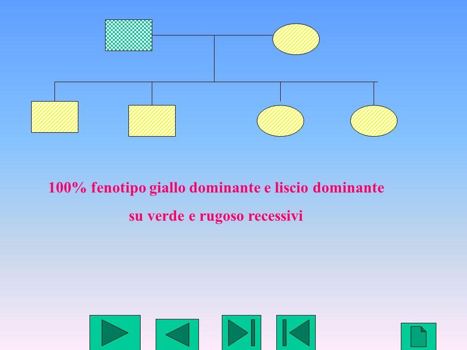 10 100% fenotipo giallo dominante e liscio dominante su verde e rugoso recessivi