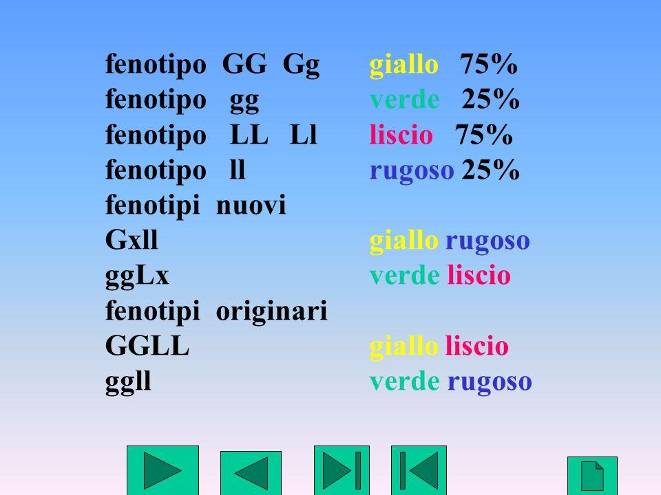 14 fenotipo GG Gggiallo 75% fenotipo ggverde 25% fenotipo LL Llliscio 75% fenotipo llrugoso 25% fenotipi nuovi Gxll giallo rugoso ggLx verde liscio fe