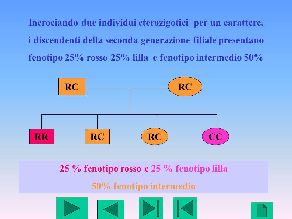 20 Incrociando due individui eterozigotici per un carattere, i discendenti della seconda generazione filiale presentano fenotipo 25% rosso 25% lilla e