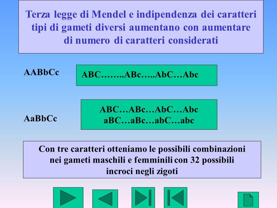 26 Terza legge di Mendel e indipendenza dei caratteri tipi di gameti diversi aumentano con aumentare di numero di caratteri considerati AABbCc AaBbCc