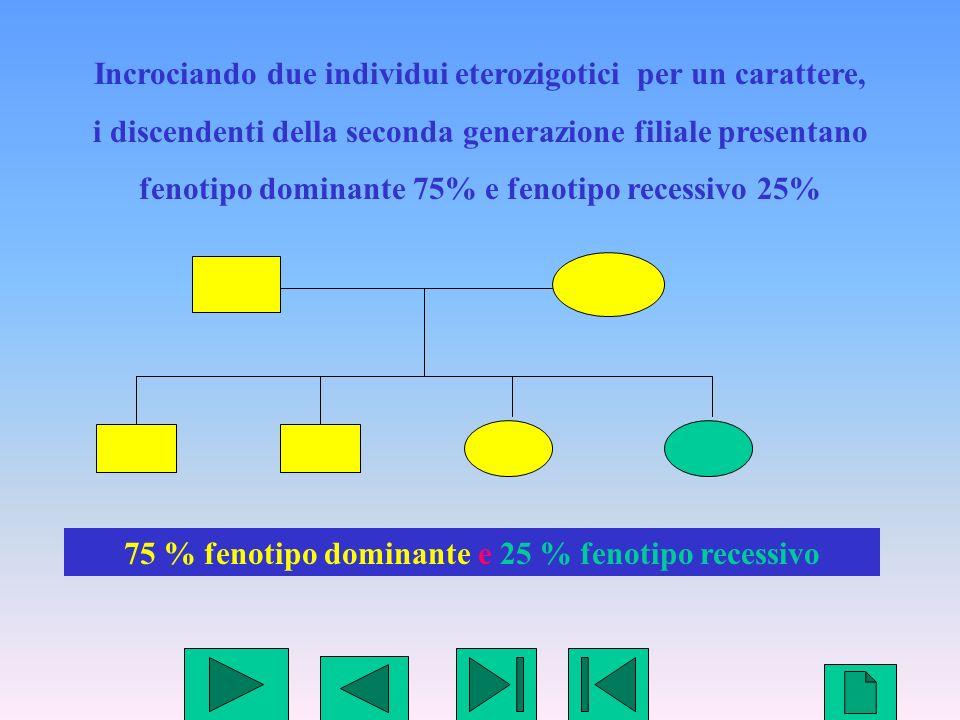 5 Incrociando due individui eterozigotici per un carattere, i discendenti della seconda generazione filiale presentano fenotipo dominante 75% e fenoti
