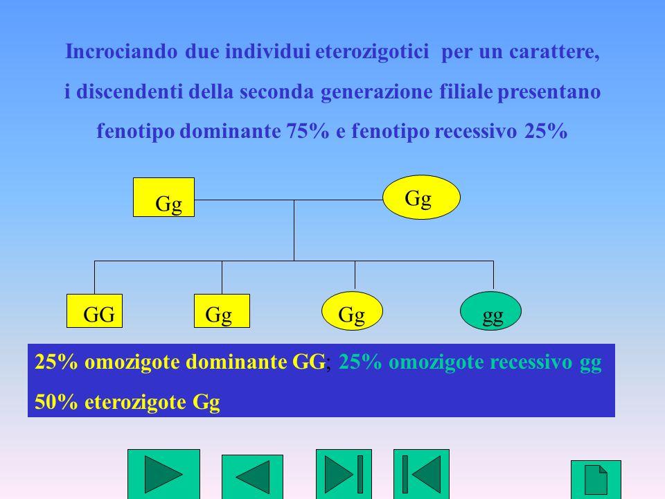 6 Incrociando due individui eterozigotici per un carattere, i discendenti della seconda generazione filiale presentano fenotipo dominante 75% e fenoti
