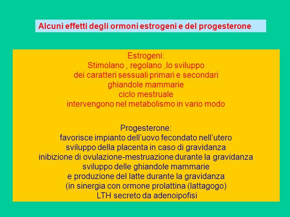 Alcuni effetti degli ormoni estrogeni e del progesterone Estrogeni: Stimolano, regolano,lo sviluppo dei caratteri sessuali primari e secondari ghiando