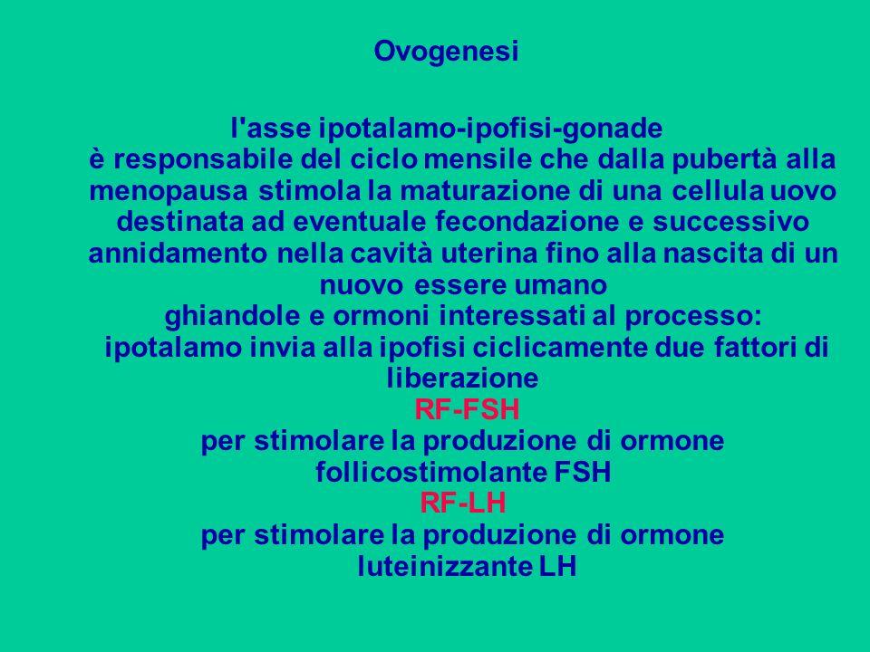 Ovogenesi l'asse ipotalamo-ipofisi-gonade è responsabile del ciclo mensile che dalla pubertà alla menopausa stimola la maturazione di una cellula uovo