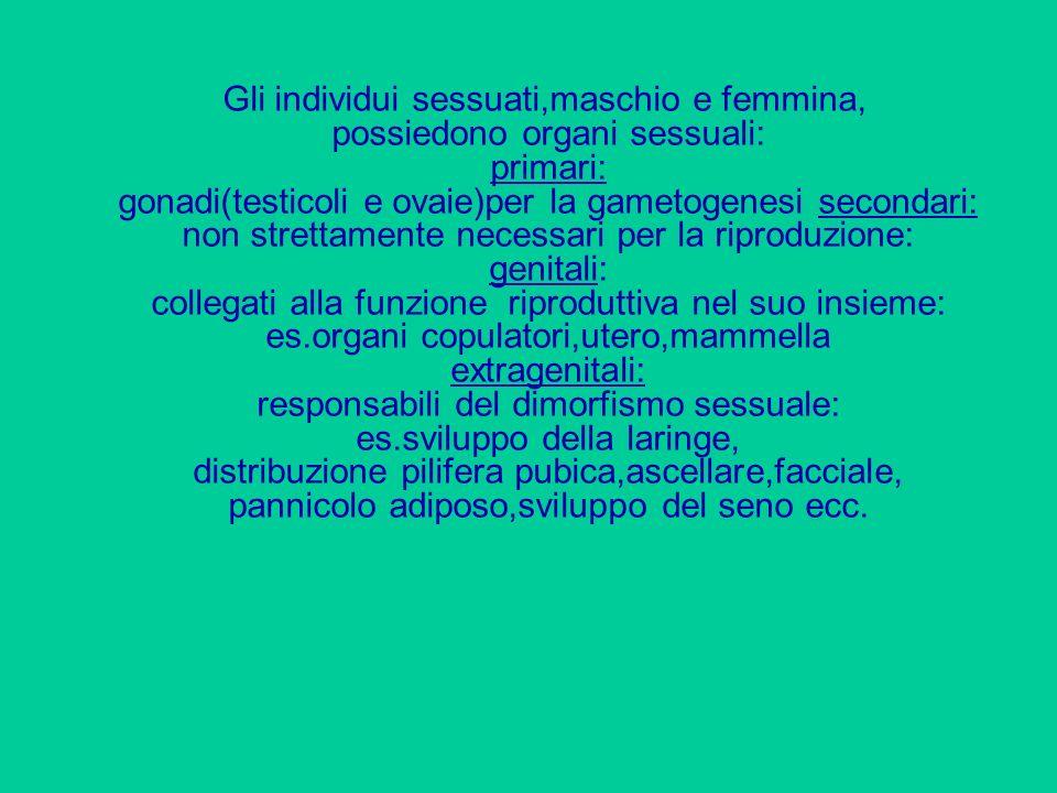 Gli individui sessuati,maschio e femmina, possiedono organi sessuali: primari: gonadi(testicoli e ovaie)per la gametogenesi secondari: non strettament