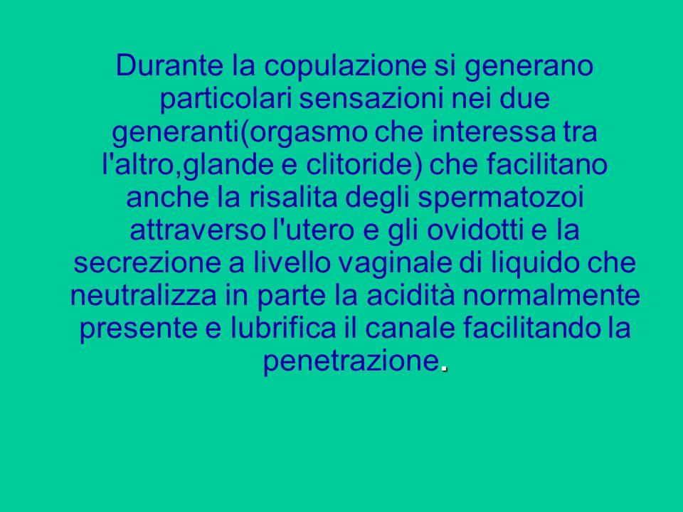 . Durante la copulazione si generano particolari sensazioni nei due generanti(orgasmo che interessa tra l'altro,glande e clitoride) che facilitano anc