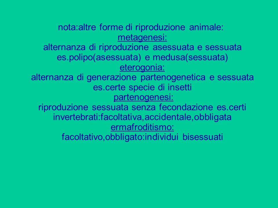 nota:altre forme di riproduzione animale: metagenesi: alternanza di riproduzione asessuata e sessuata es.polipo(asessuata) e medusa(sessuata) eterogon