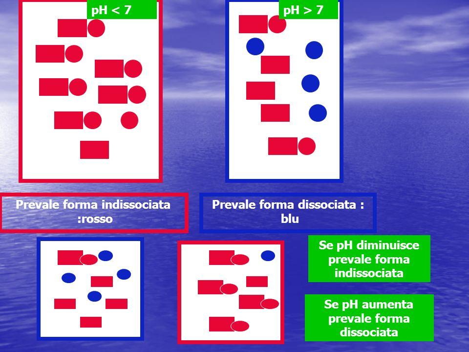Prevale forma indissociata :rosso Prevale forma dissociata : blu pH < 7pH > 7 Se pH diminuisce prevale forma indissociata Se pH aumenta prevale forma