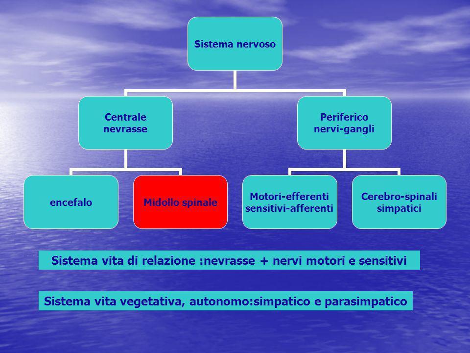 Via sensitiva spino talamo-corticale frontale parietale temporale occipitale cervelletto bulbo ponte talamo mesencefalo