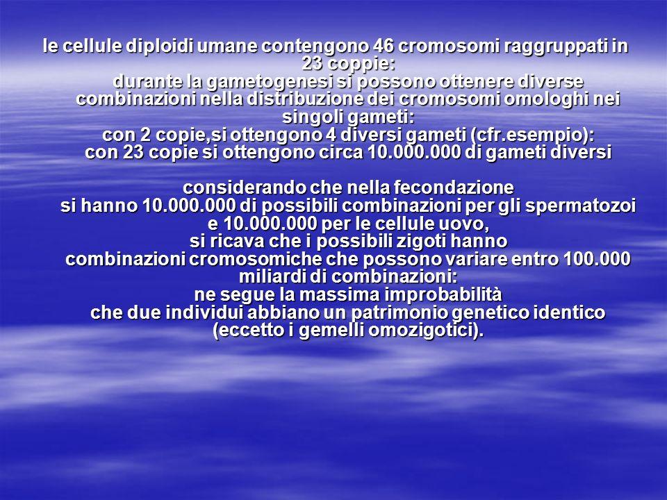 le cellule diploidi umane contengono 46 cromosomi raggruppati in 23 coppie: durante la gametogenesi si possono ottenere diverse combinazioni nella dis