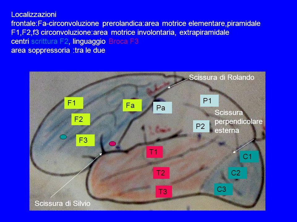 F1 F2 F3 Fa Pa P1 P2 T1 T2 T3 C1 C2 C3 Scissura di Rolando Scissura di Silvio Scissura perpendicolare esterna Localizzazioni frontale:Fa-circonvoluzio