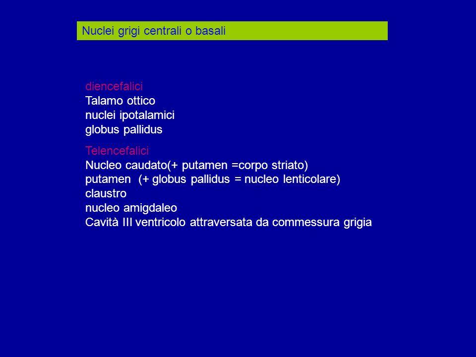 Nuclei grigi centrali o basali diencefalici Talamo ottico nuclei ipotalamici globus pallidus Telencefalici Nucleo caudato(+ putamen =corpo striato) pu