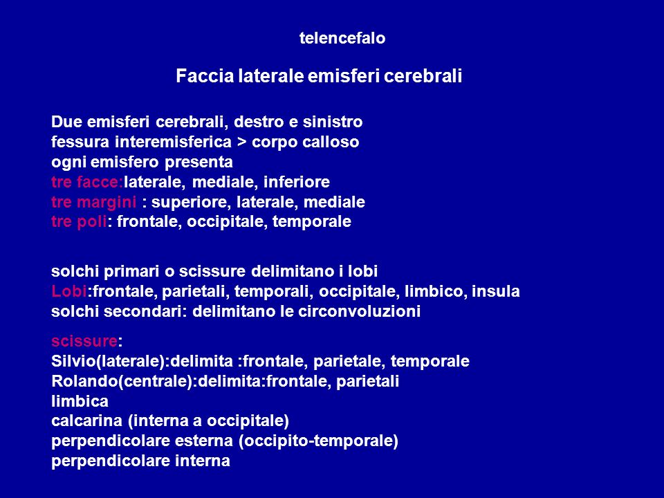 Localizzazioni frontale:4-6-circonvoluzione prerolandica:area motrice elementare,piramidale 8-9-44 circonvoluzione:area motrice involontaria, extrapiramidale centri scrittura, linguaggio Broca 44 Lobo parietale: 1-2-3-7-postrolandica :area sensitiva primaria Lobo temporale tre circonvoluzioni 22-41-42 area acustica primaria < genicolato mediale centro di Wernekink Lobo insula lobulo anterior e posteriore Lobo occipitale tre circonvoluzioni:vista 17-18-19 Faccia laterale emisferi cerebrali
