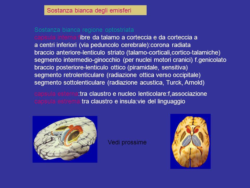 Sostanza bianca degli emisferi Sostanza bianca regione optostriata capsula interna:fibre da talamo a corteccia e da corteccia a a centri inferiori (vi