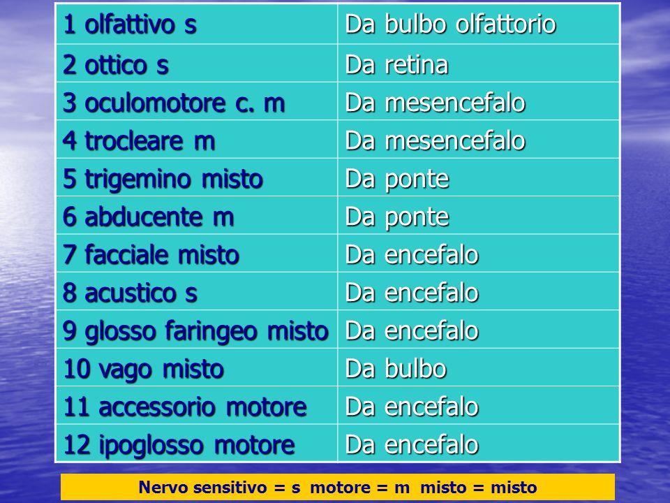 1 olfattivo s Da bulbo olfattorio 2 ottico s Da retina 3 oculomotore c. m Da mesencefalo 4 trocleare m Da mesencefalo 5 trigemino misto Da ponte 6 abd