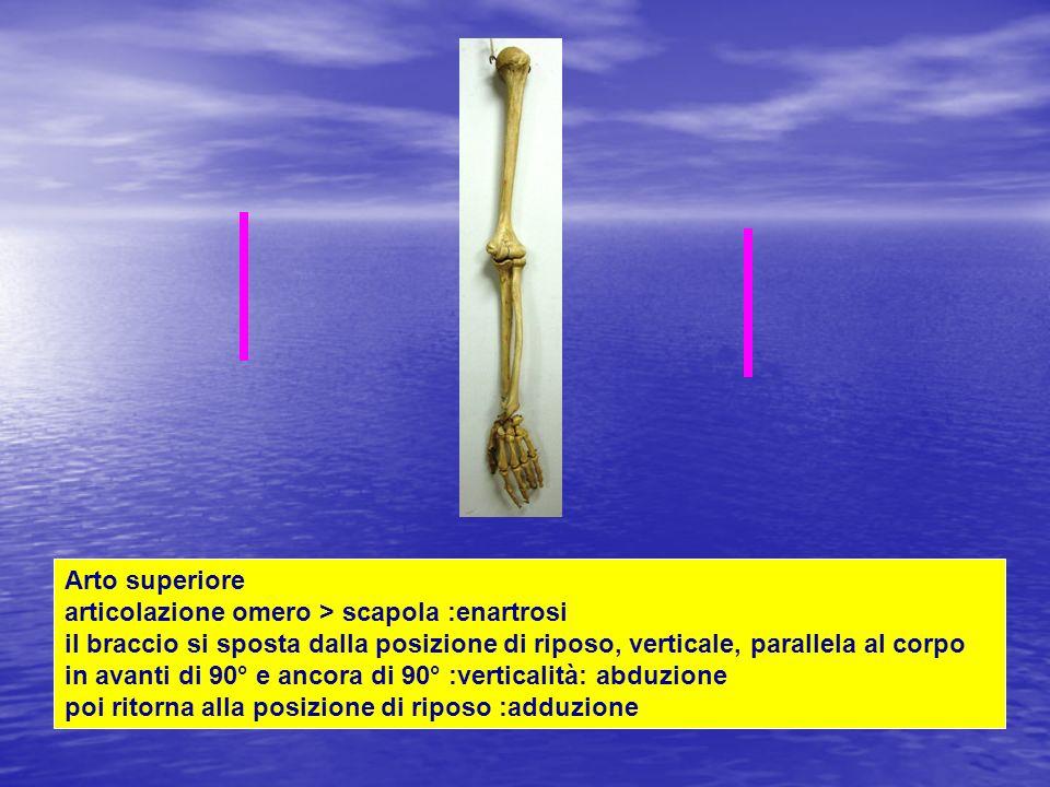 Arto superiore articolazione omero > scapola :enartrosi il braccio si sposta dalla posizione di riposo, verticale, parallela al corpo in avanti di 90°