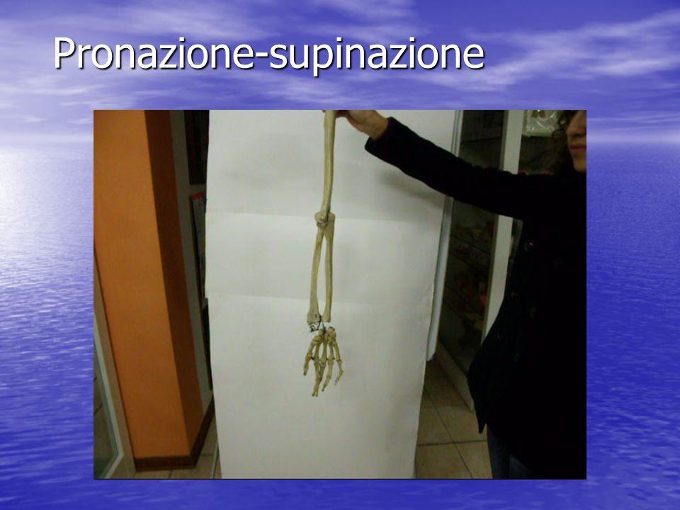Pronazione-supinazione