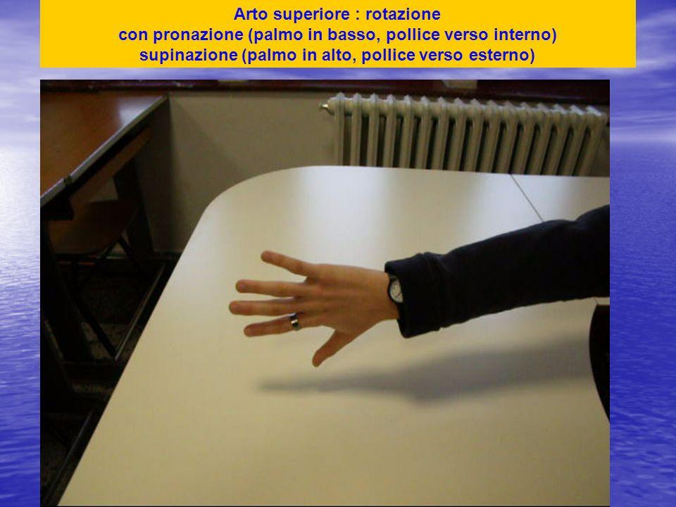 Arto superiore : rotazione con pronazione (palmo in basso, pollice verso interno) supinazione (palmo in alto, pollice verso esterno)